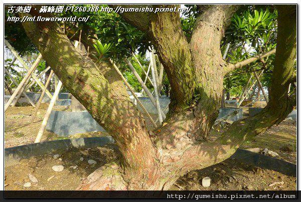 P1260388.jpg