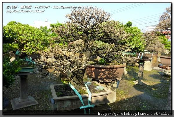 P1200387.jpg