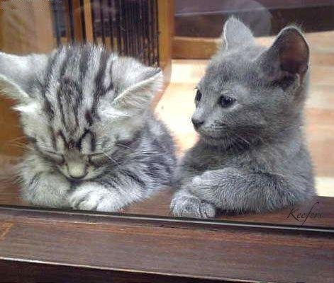 funny-pictures-kitten-offers-to--1.jpg
