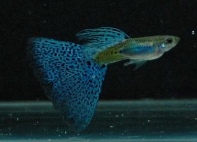藍草尾-12