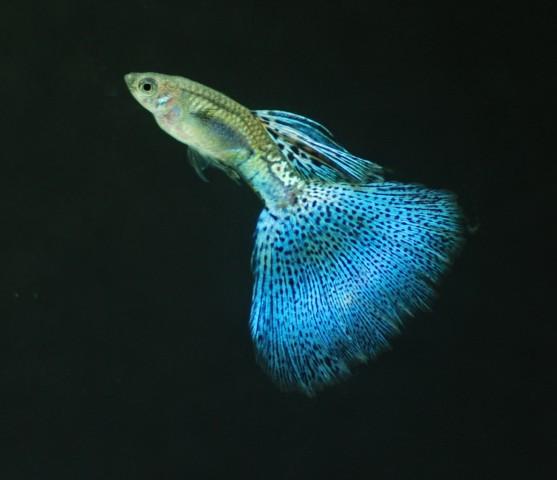 藍草尾-18