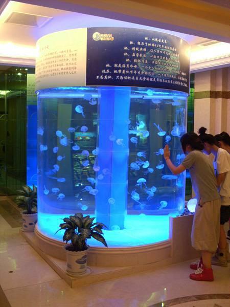 img6.水母缸-2