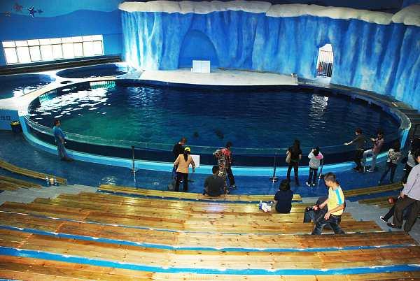 img3.海豚表演大洋池