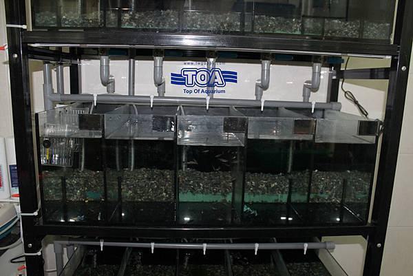 孔雀魚系統 (L)