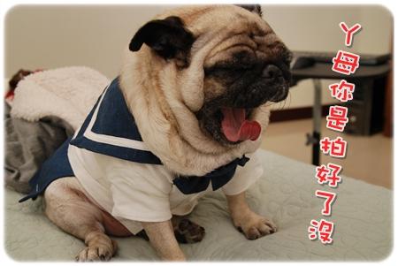 2009.11.21_PET QBEQ 秋冬新裝_016.JPG