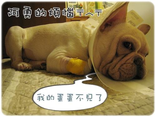 2009.08.06_阿勇的蛋蛋不見了_000.JPG