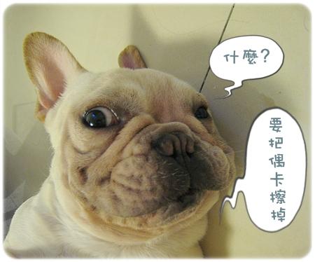 2009.08.06_阿勇的蛋蛋不見了_001.JPG