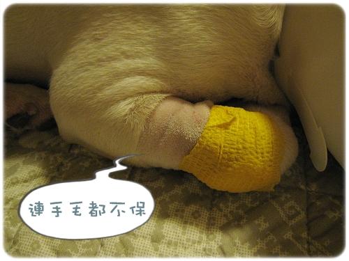 2009.08.06_阿勇的蛋蛋不見了_010.JPG