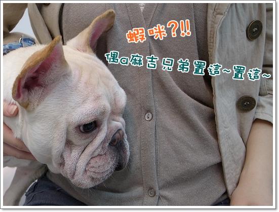 2010-11-18_阿勇葛格_003