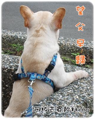 毛囊蟲治療_07-19_003.JPG