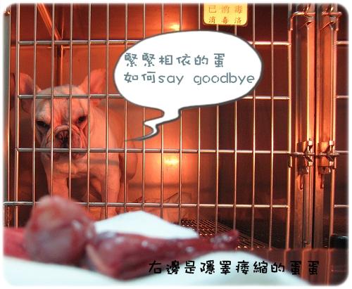 2009.08.06_阿勇的蛋蛋不見了_003.JPG