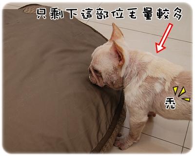 毛囊蟲治療_06-02_003.JPG