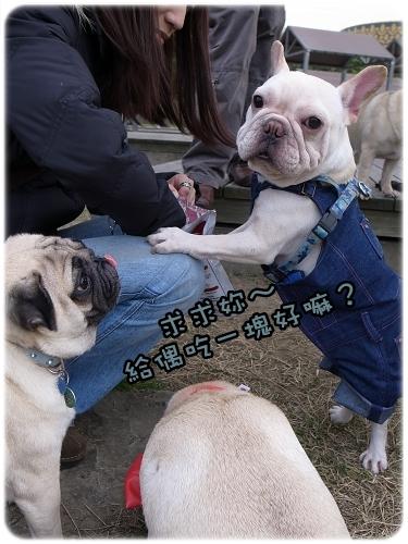 2010-12-11_八里巴哥狗聚_010.jpg