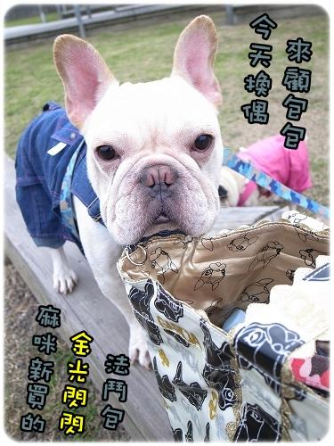 2010-12-11_八里巴哥狗聚_001.jpg