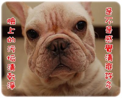 毛囊蟲治療_06-11_003.JPG