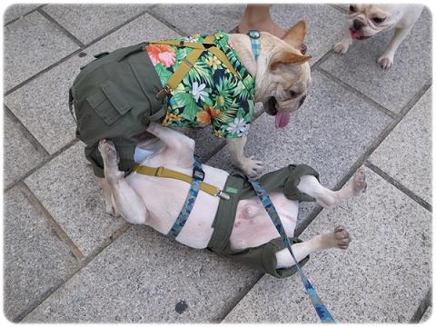 2010.05.15-16_天母市集阿勇來探班_010.jpg