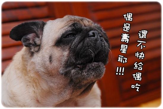 2010-12-04_咕嚕九歲生日趴015.jpg