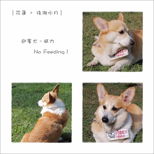 2009-12-25_花蓮行_後湖水月_002.jpg
