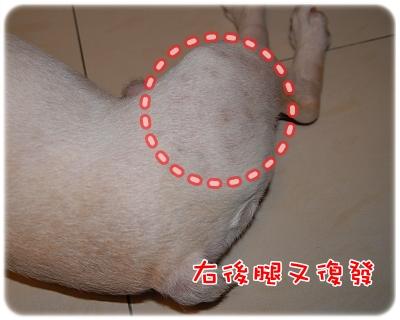 毛囊蟲治療_07-05_003.JPG