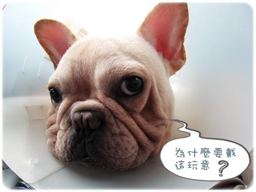 2009.08.06_阿勇的蛋蛋不見了_006.JPG