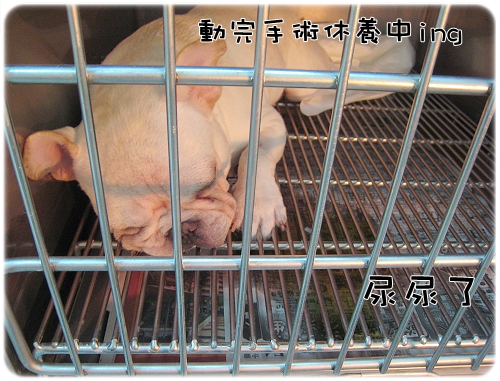 2009.08.06_阿勇的蛋蛋不見了_004.JPG