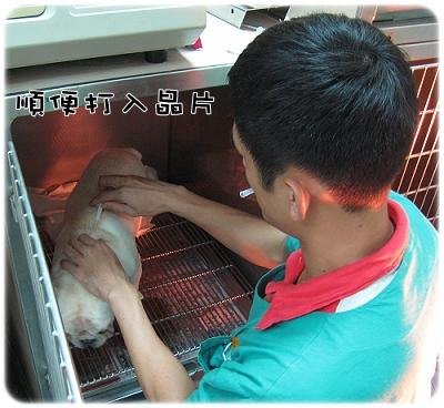 2009.08.06_阿勇的蛋蛋不見了_005.JPG