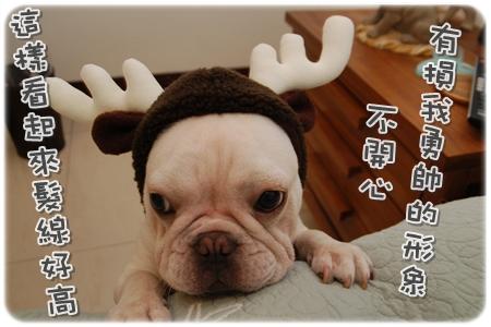 2009.11.21_PET QBEQ 秋冬新裝_011.JPG