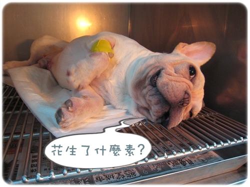 2009.08.06_阿勇的蛋蛋不見了_002.JPG