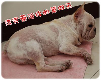 毛囊蟲治療_06-11_001.JPG