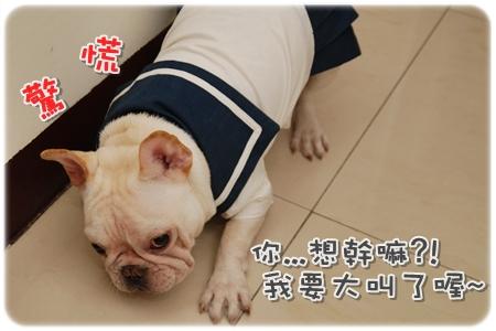 2009.11.21_PET QBEQ 秋冬新裝_008.JPG