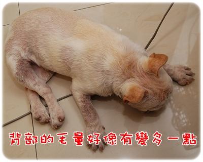 毛囊蟲治療_06-11_002.JPG