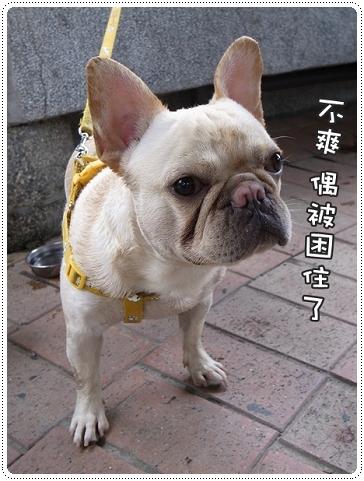 2010.07.10_宜蘭武荖坑_008.JPG