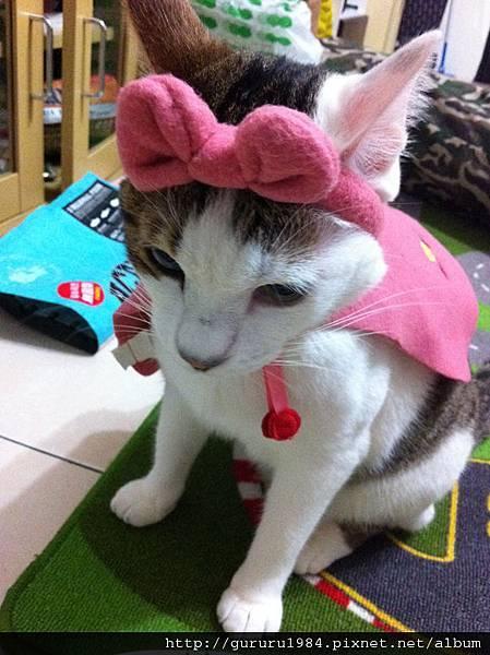 波蘿小紅帽