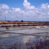 1098081-salt_field_Batz_sur_Mer