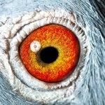 BE11-2022110_eye