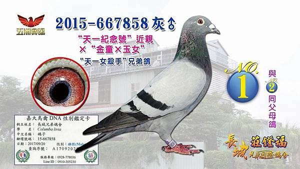 2015-667858灰♂.jpg