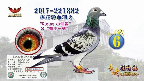 2017-221382斑花頭白羽♂.jpg