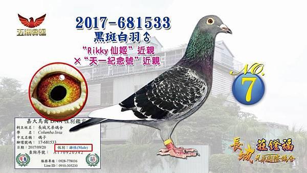 2017-681533黑斑白羽♂.jpg