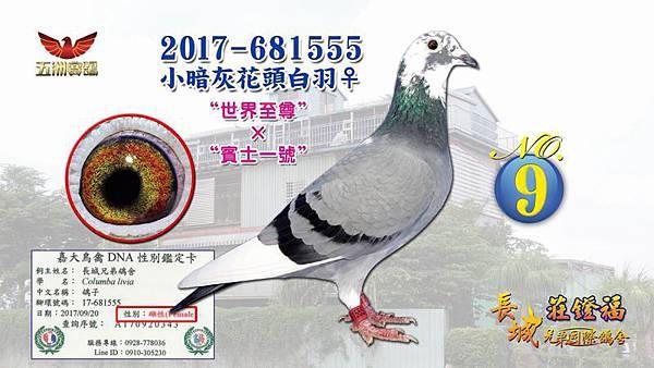 2017-681555小暗灰花頭白羽♀.jpg