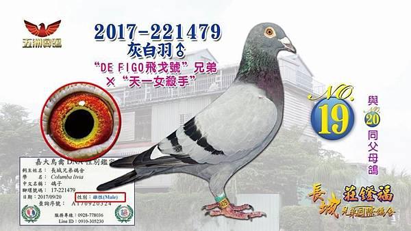 2017-221479灰白羽♂.jpg