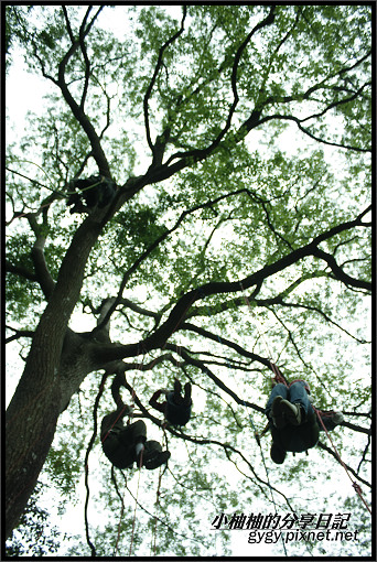推廣講師新竹爬樹062.jpg