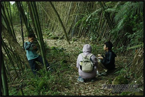 推廣講師新竹爬樹149.jpg