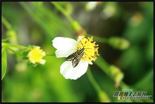 龜山島980927_111.jpg