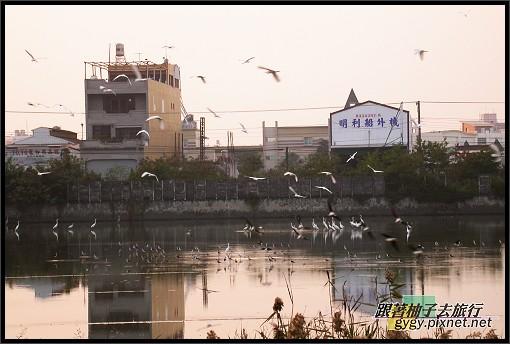 東港風景012.jpg