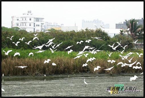 東港風景016.jpg