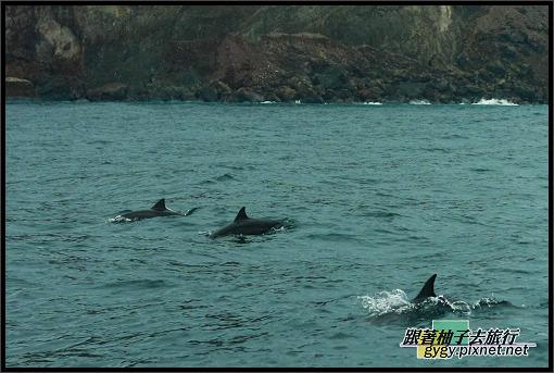 龜山島981115_139.jpg