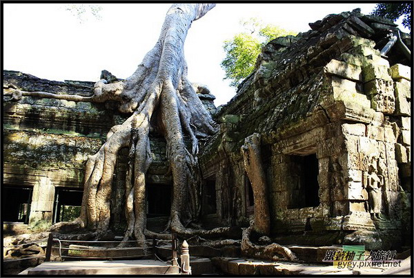 【塔普倫寺Ta Prohm 】樹根與廟合而為一.jpg
