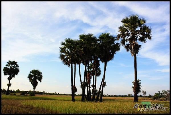 黃昏的棕櫚樹.jpg