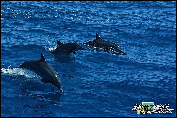 跟著柚子到龜山島賞鯨豚980912