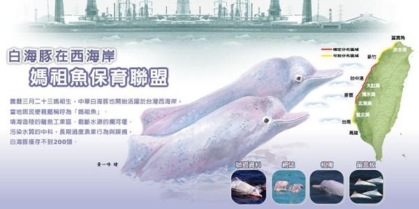 部落格頭-台灣白海豚990412.jpg